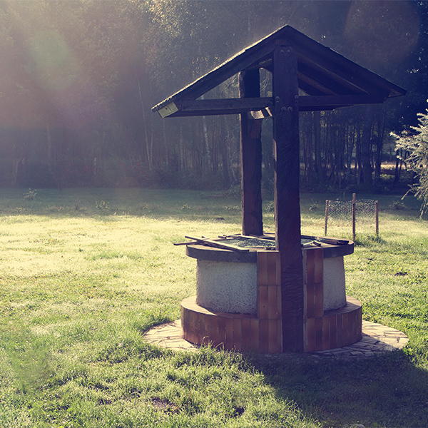 wishing well in forest